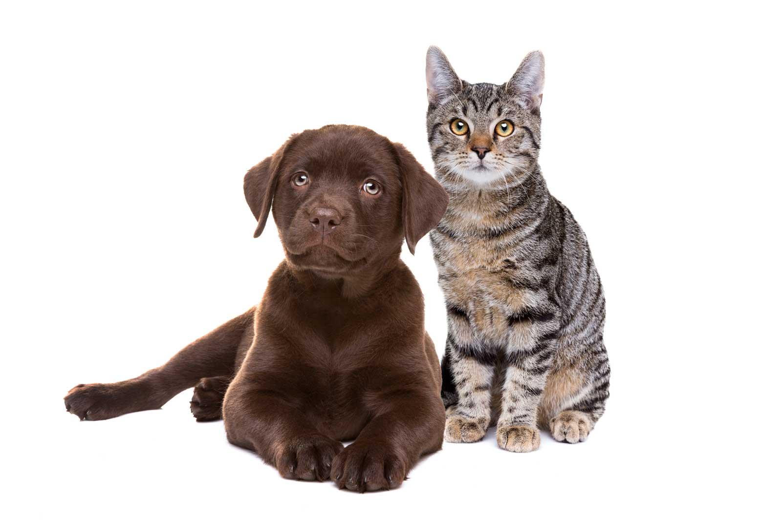 Katze Hund Produkt Anwendung