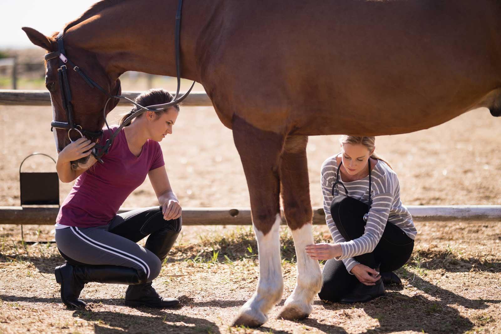 Pferde Produkte Anwendung